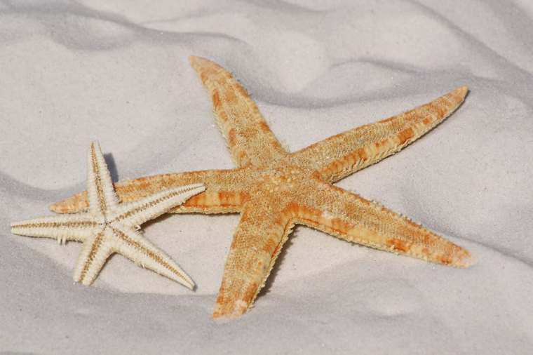 starfish-sand-beach-sea-56610.jpeg